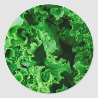 Lettuce Close Up Print - Weird Unique Gift Classic Round Sticker