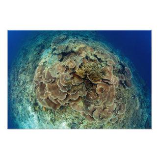 Lettuce Coral Reef Print