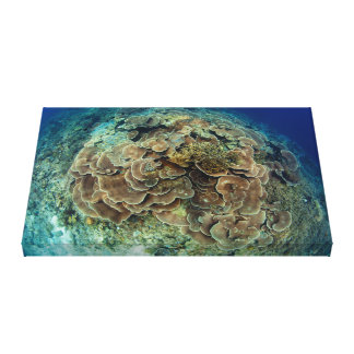 Lettuce Coral Reef View Canvas
