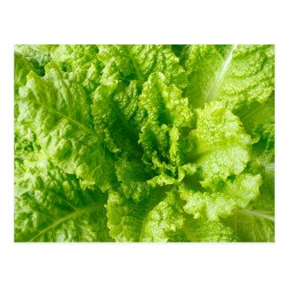 Lettuce Postcard