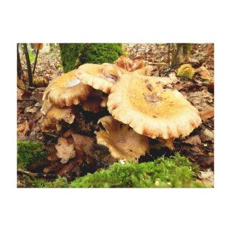 Leucopaxillus giganteus Mushroom Canvas Print