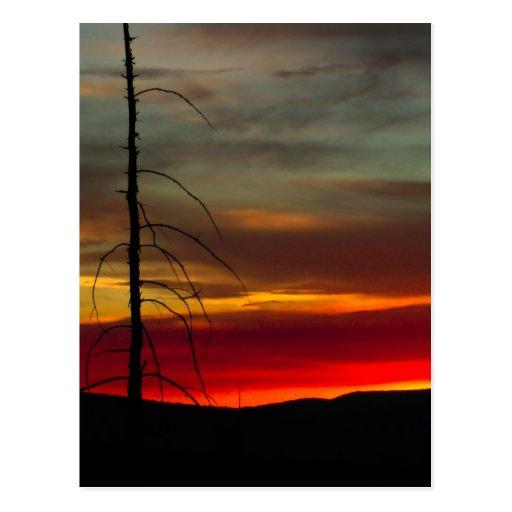 Lever de soleil oriental de l'Orégon Carte Postale
