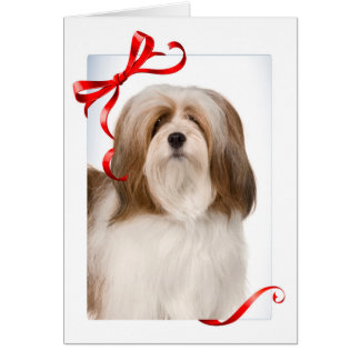 Lhasa Apso Christmas Card