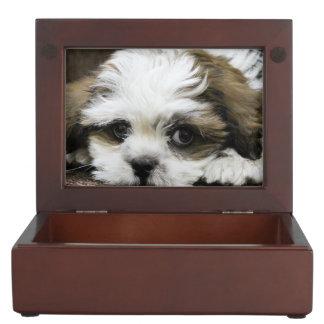 Lhasa apso keepsake box