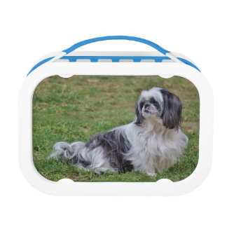 Lhasa Apso Lunch Box