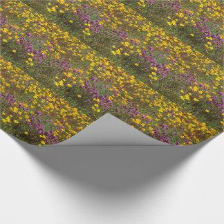 Liatris California Poppy Wildflower Flowers Floral