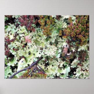 Lichen, Ainsworth Bay, Tierra del Fuego, Chile Poster