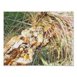 Lichen and Air Plant Poster