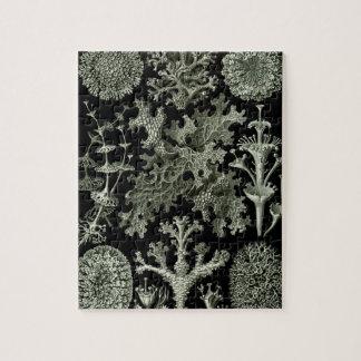 Lichen by Ernst Haeckel, Vintage Nature Plants Puzzles