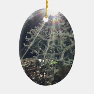 Lichen Rays Ceramic Oval Ornament