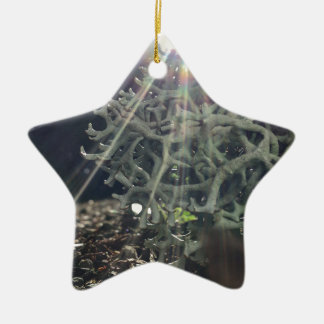 Lichen Rays Ceramic Star Ornament