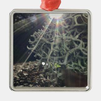 Lichen Rays Metal Ornament