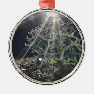Lichen Rays Silver-Colored Round Ornament