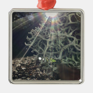 Lichen Rays Silver-Colored Square Ornament