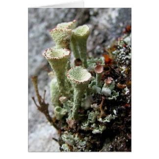 Lichens Card