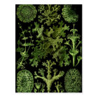 Lichens Green and Black Postcard