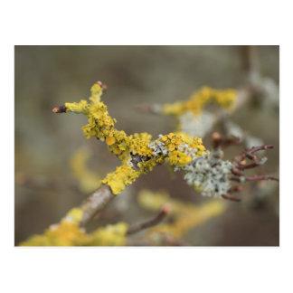 Lichens Postcard