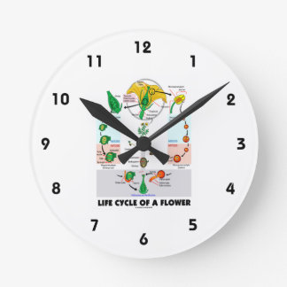 Life Cycle Of A Flower (Angiosperm) Clock