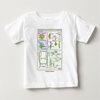 Life Cycle Of A Typical Moss (Bryophyte) Baby T-Shirt