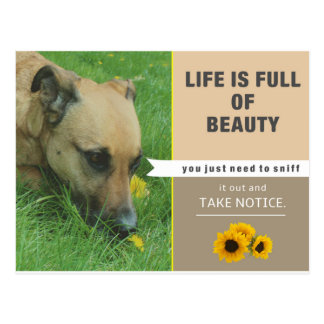 Life is Beautiful - Postcard