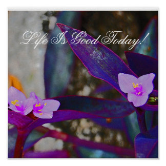 Life Is Good Today! Poster