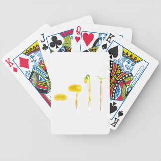 Lifecycle germination bean on white for education bicycle playing cards