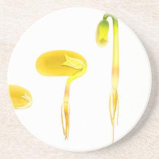 Lifecycle germination bean on white for education coaster