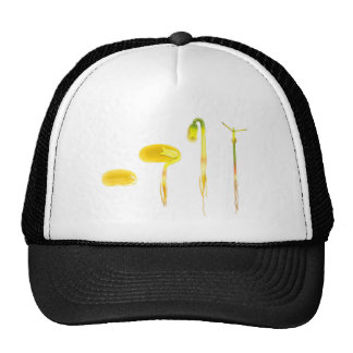 Lifecycle germination bean on white for education trucker hat