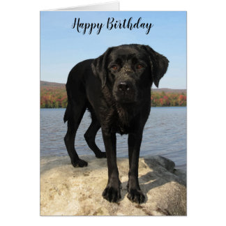Life's a Beach - Black Labrador - Happy Birthday Card
