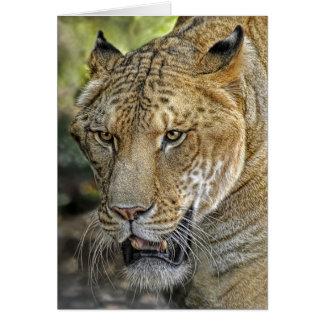 Liger Half Lion Half Tiger Card