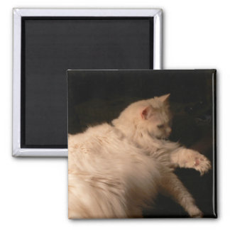 Light and Shadow Cat Square Magnet