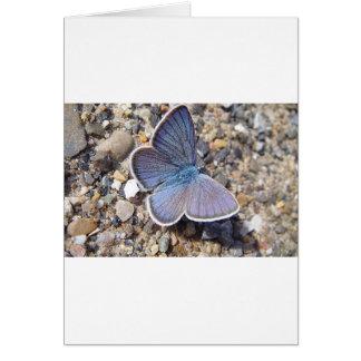 Light blue butterfly card