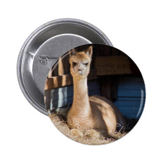 Light Fawn Alpaca Pinback Button
