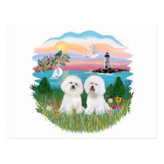 Light House - Two Bichon Frise Postcard