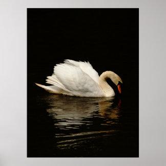 Light In The Dark - Swan Poster