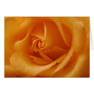 Light Orange Rose Card