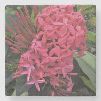Light Pink Kauai Flowers Stone Coaster