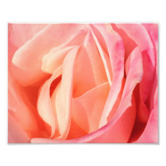 Light Pink Rose 8x10 Art Photo