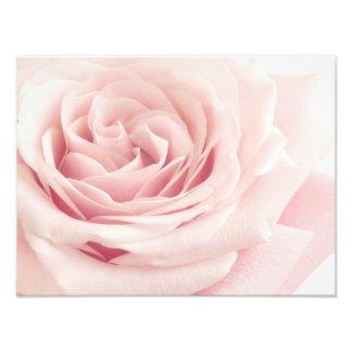 Light Pink Rose Flower - Roses Flowers Floral Photo