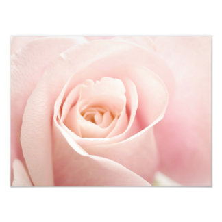 Light Pink Rose Flower - Roses Flowers Floral Photograph