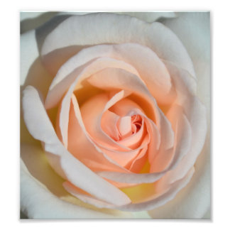 Light Pink Rose Photo Art
