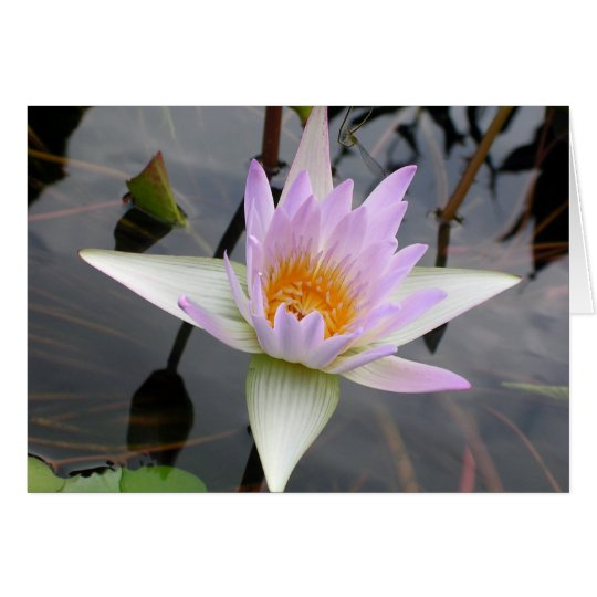 Light Purple Water Lily Card