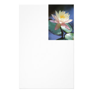 Light Reflection Stationery