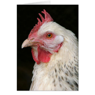 Light sussex hen card