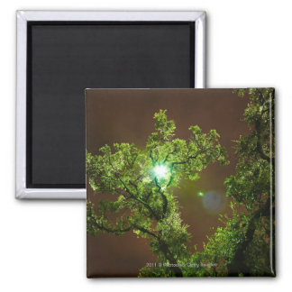 Light Through Trees at night Square Magnet