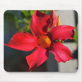 Light Within (Mandevilla) Mouse Pad