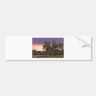 Lightning In The Woods Bumper Sticker