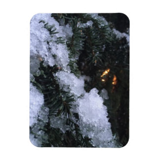 Lights in the Snowy Forest magnet