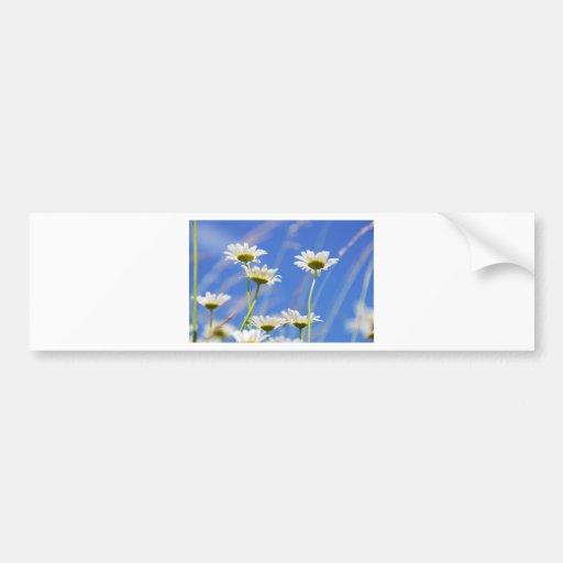 Liking rites sky Leucanthemum vulgare Bumper Stickers