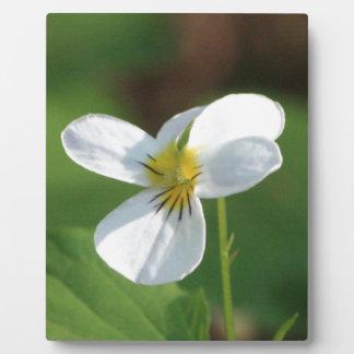 Lil White Flower Plaque
